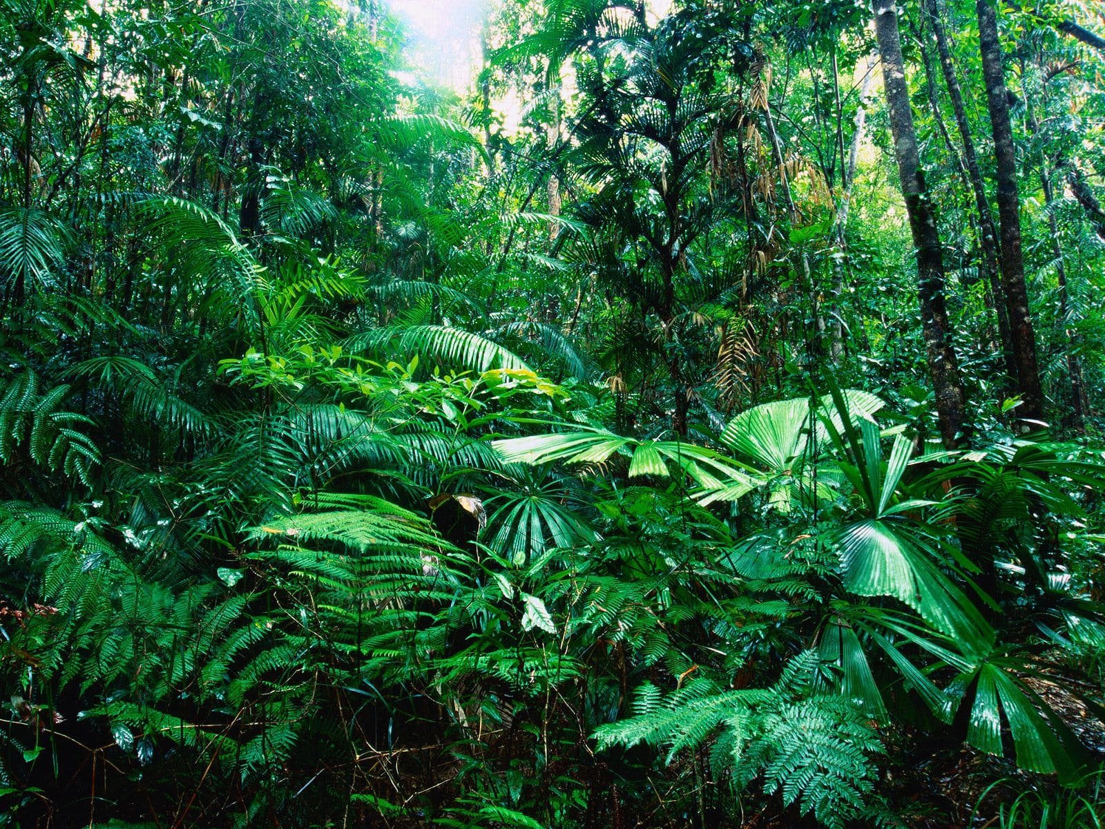 6902956-tropical-forest
